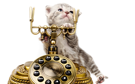 The Top 4119 Animals to Hire for Your Call Center